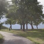 Johannifeuer & Fest der Bäume am 24. Juni von 17 bis 22 Uhr